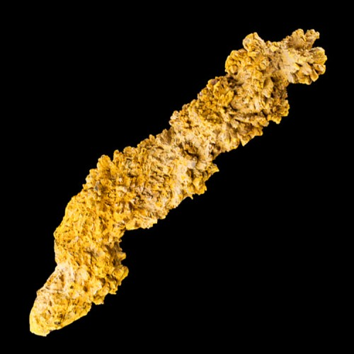 "7.8"" Fossil Dino Poop COPROLITE Dark Brown Co..."