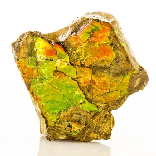 "2.2"" Iridescent AMMOLITE Fossil Ammonite Shel..."
