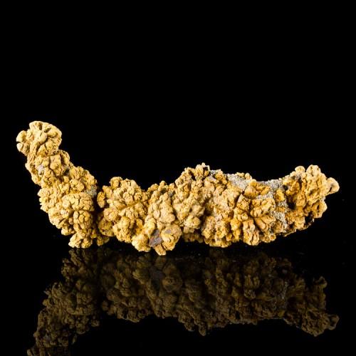 "5.7"" Dino Poop Fossil COPROLITE Dark Brown Co..."