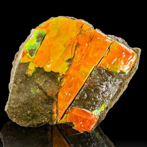 """2.4"""" Orange-Red+Green Iridescent GEM AMMOLITE..."""