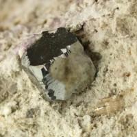 "8mm Brilliant Metallic BIXBYITE Cubic Crystal in 4""Rhyolite Matrix Utah for sale"