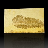 "11.7"" Complex Fern-Like Brown PSILOMELANE DENDRITES onLimestone Germany for sale"