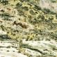 """9.2"""" YellowTanWhiteBlue Orbicular OCEAN JASPER Polished Slab Madagascar for sale"""