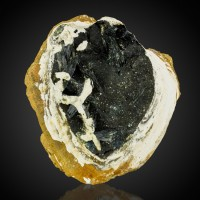 """3.2"""" Midnight Green VIVIANITE Crystals Growing in a FOSSIL CLAM Ukraine for sale"""