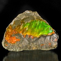 "2.9"" DayGlow Orange Green Yellow Shimmering Shiny AMMOLITE Ammonite CAN for sale"
