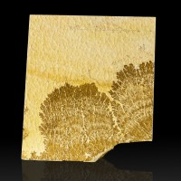 "8.3"" Chocolate Brown Sea Fan Psilomelane DENDRITE on Limestone Germany for sale"
