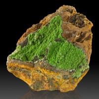 """4.1"""" Saturated Green Botryoidal CONICHALCITE Crystals onLimonite Mexico for sale"""