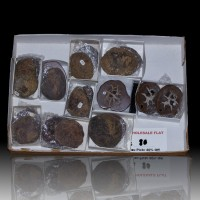 Wholesale Flat Sawn & Polished SEPTARIAN NODULES 10 Pairs @$8 Morocco for sale