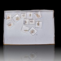 Wholesale Flat JAPAN LAW TWINS Clear Quartz 11 pieces @$15 Madagascar for sale