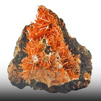 "2.6"" Flame OrangeRed CROCOITE Jackstraw Crystals Adelaide Mine Tasmania for sale"