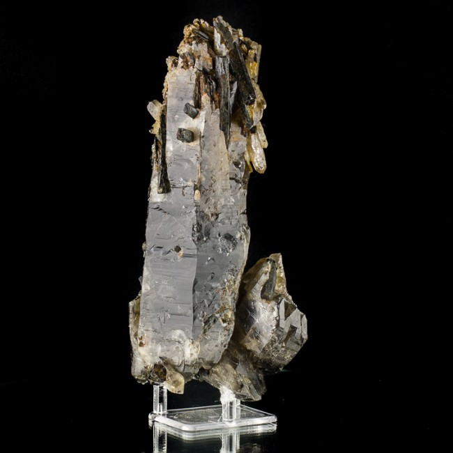"8.7"" SMOKY QUARTZ Speared by GlossyBlack AEGERINE Crystals to 2"" Malawi for sale"