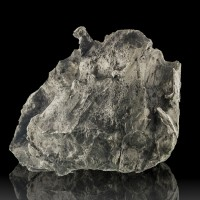"3"" 309g Sikhote Alin METEORITE Oriented Twisted Shrapnel Siberia 1947 for sale"
