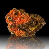 "3.7"" Red Gemmy Crystals of CROCOITE on Matrix Adelaide Mine Australia for sale"