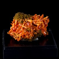 "2.3"" SuperBright OrangeRed CROCOITE Crystals in Vugs on Matrix Tasmania for sale"