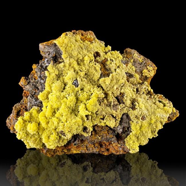 """3.7"""" Golden Yellow MIMETITE Sharp Mini-Botryoidal Crystal Points Ojuela M Mexico"""