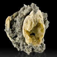 """4.8"""" Golden CALCITE Crystals Grown Inside Complete FOSSIL CLAM Florida for sale"""