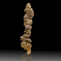 "7.2"" COPROLITE Dinosaur Dung Odor Free Sharply Formed Fossil Madagascar for sale"