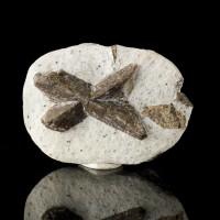 "3.6"" Twin ""Fairy Cross"" STAUROLITE Fine Sharp Crystals on Matrix Russia for sale"