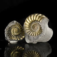 "2.3"" Shiny Gold PYRITE FOSSIL Spiral AMMONITES 2 Halves +Matrix Germany for sale"