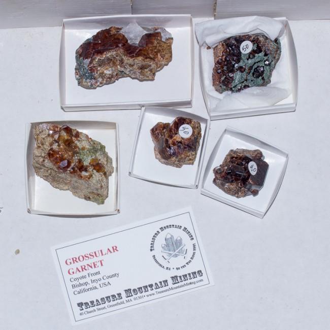 Wholesale Flat 5 pieces GROSSULAR GARNET Crystals Coyote