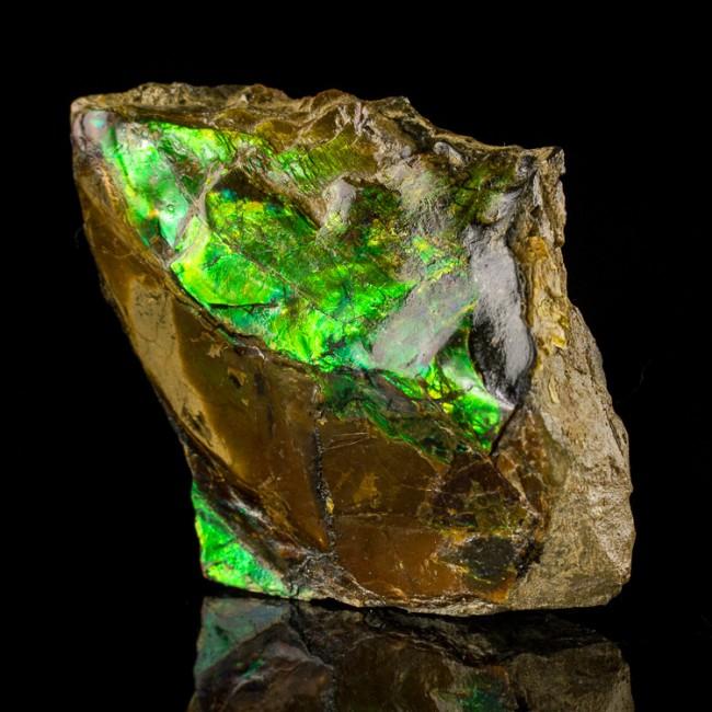 "3.2"" Fossil Green+Orange+Red Iridescent GEM AMMOLITE (Ammonite) Canada for sale"