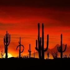Tucson18